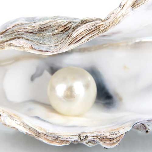muschel-perle